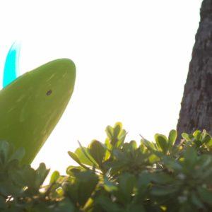 Hawaii Surfboard Sunrise