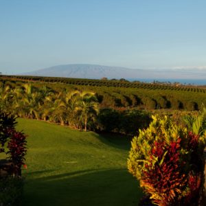 Hawaii Luxury Vacation Coffee Farm