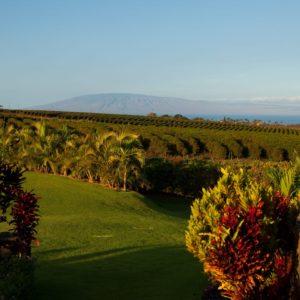 Hawaii Luxury Vacation Coffee Farm