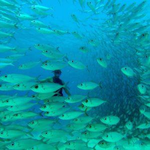 Hawaii Luxury Vacation Scuba Diving Fish School