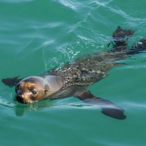 Auckland Harbour wildlife