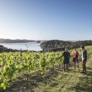 Vineyard Bay Of Islands Northland