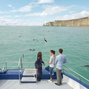 Kaikoura Canterbury Dolphin Adventures Watching Cruise