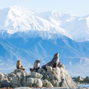 Mountains Snowcapped Wildlife Kaikoura Canterbury