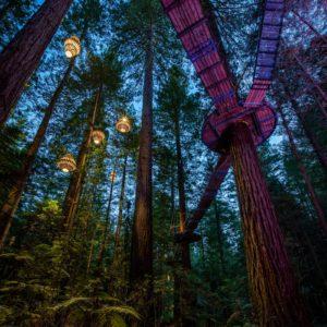 Redwoods Treewalk Night Rotorua