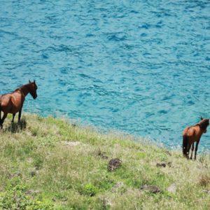 Tahiti Ua Huka Wild Horses wild grass ocean