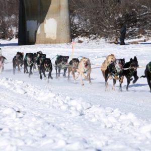 Alaska Luxury Vacation Fairbanks Dogsled Race