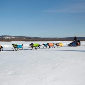 Alaska Luxury Vacation Galena Dog Sled Race