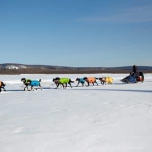 Alaska Luxury Vacation Galena Dog Sled Race