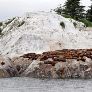 Alaska Luxury Vacation Glacier Bay National Park And Preserve Sea Lions