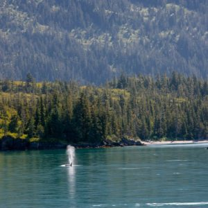 Alaska Luxury Vacation Prince William Sound