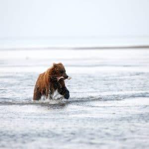 Alaska Luxury Vacation Silver Salmon Creek Lodge Bear Salmon Fishing