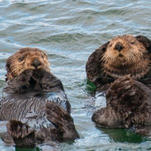 Alaska Luxury Vacation Sitka Two Otters