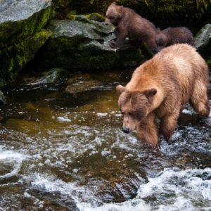 Alaska Luxury Vacation Wrangell Bears Fishing