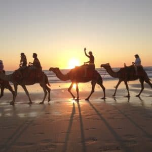 Camel Train On Cable Beach Broome Wa Luxury Australia Vacation