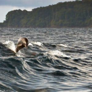 Cano Island Dolphin