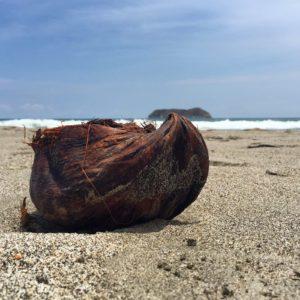 Coconut Beach Costa Rica Tropical Travel Sea