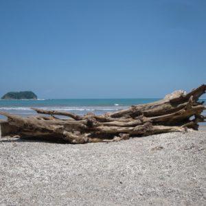 Costa Rica Pacific Beach Wood Baustamm Sea