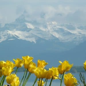 Europe Luxury Switzerland Vacation Tulips Montblanc Lake Geneva Montreux Switzerland