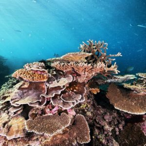 Great Barrier Reef Queensland Coral Luxury Australia Vacation
