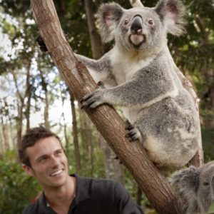Koala Queensland Experience Luxury Australia Vacation
