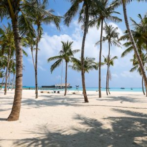 Luxury Thailand Vacation Beach Coconut Pal Trees