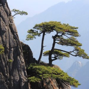 Luxury Vacation China Asia China Huangshan Mountain Landscape Rock