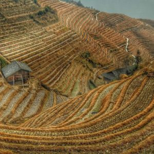 Luxury Vacation China Asia Harvest China Rice Rice Fields Agriculture China Contours