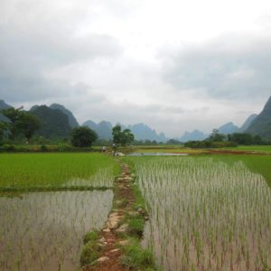Luxury Vacation China Asia Yunnan Rice Field China Field Agriculture