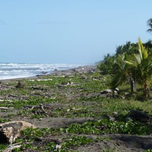 Pacific Costa Rica Beach Wood Baustamm Sea