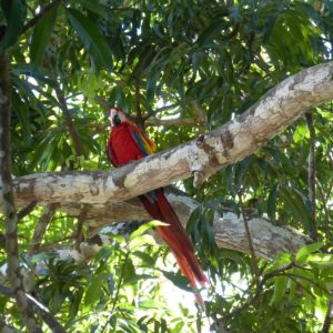 Parrot Bird Costa Rica Central America
