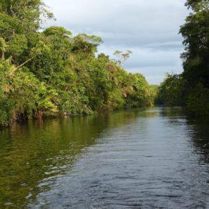 River Rainforest Costa Rica Central America