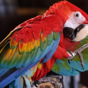 Scarlet Macaw Tropical Bird Brazilian Rio Rainforest