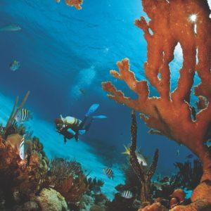 Scuba Diving Ciénaga De Zapata Cuba Luxury Vacation
