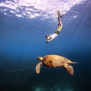 Sea Turtle Snorkling Great Barrier Reef Queensland Luxury Australia Vacation