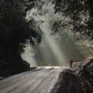 Selva Valdiviana