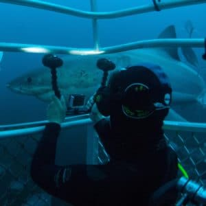 Underwater Camera Shark Diving Neptune Islands Sa Luxury Australia Vacation